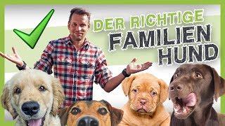 Die 5 besten Familienhunde (den richtigen Hund finden)