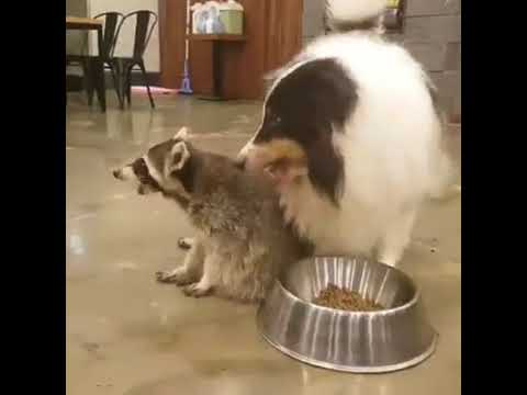 He will disguise and steal the puppy's food