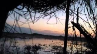 охота на селезня с подсадной уткой Великие Луки 2012