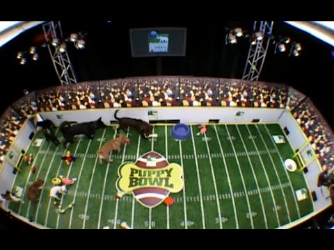 Necessary Ruffness: Animal Planet's 'Puppy Bowl' Premieres