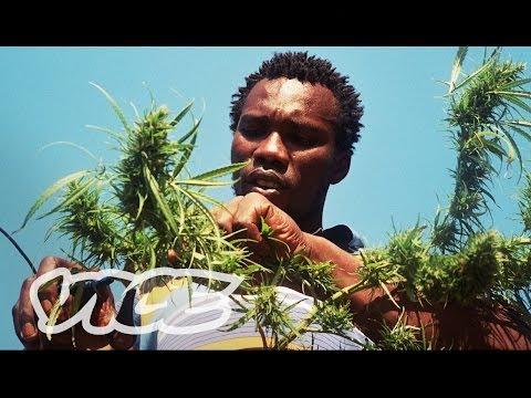 Swaziland: Gold Mine of Marijuana (Part 2/2)