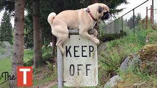 10 Naughty Animals Who DON'T CARE About Your Rules