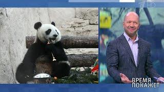 Панда из Московского зоопарка. Время покажет. Фрагмент выпуска от 24.01.2020