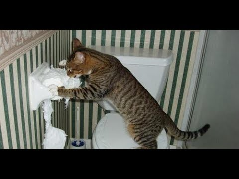 Funny Cats Vs Toilet Paper Compilation 2017 - Funny Cat Videos