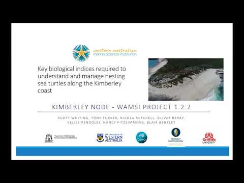 Nesting Marine Turtles: WAMSI Lunch and Learn