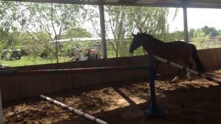 Sarituri libere cu cai la Mandruloc, Julia, MD Horses