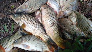 Đắp Cá Bắt Cá Suối Toàn Cá To Phần 2