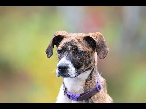 Dog Training Progress Report - Video Excerpt