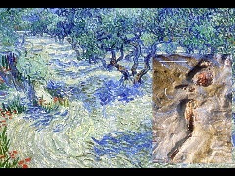 Grasshopper discovered in Vincent van Gogh painting
