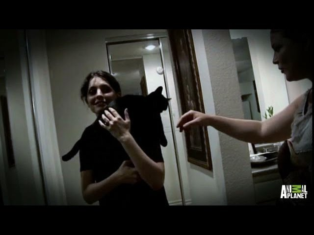 Dexter and Daisy the Ferocious Fighting Felines | My Cat From Hell