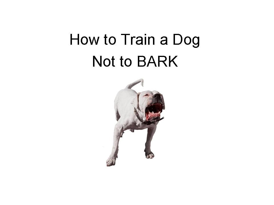how to train a dog not to bark youtube