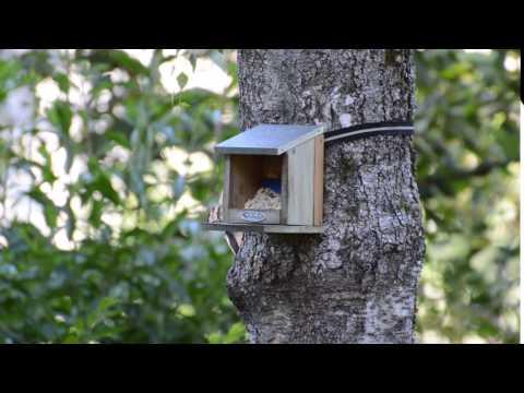 Wood pecker, pocker, wood, net, house