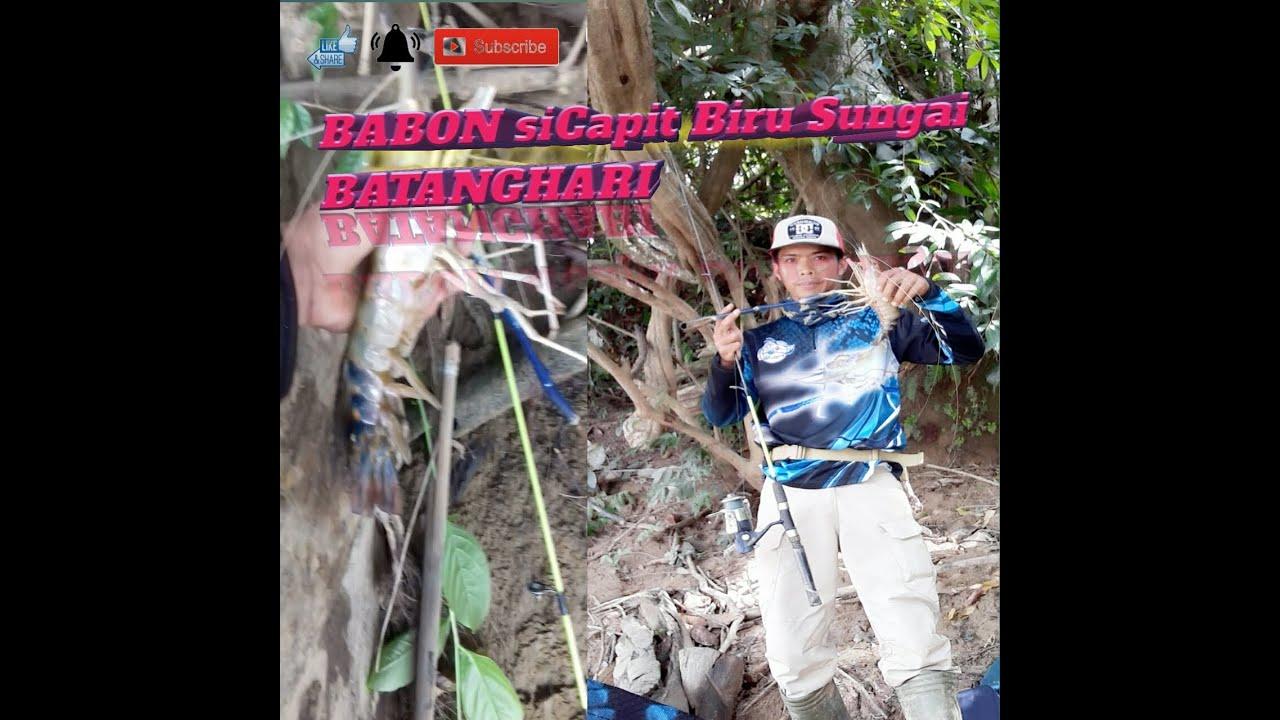 mancing udang galah SUPER JUMBO di sungai Batang hari ...