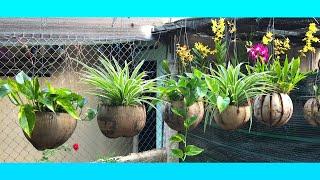 Transformando Coco seco em Belos Vasos para Plantas