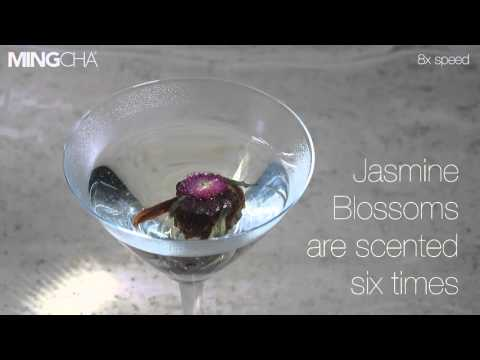 How To Brew Jasmine Blossoms