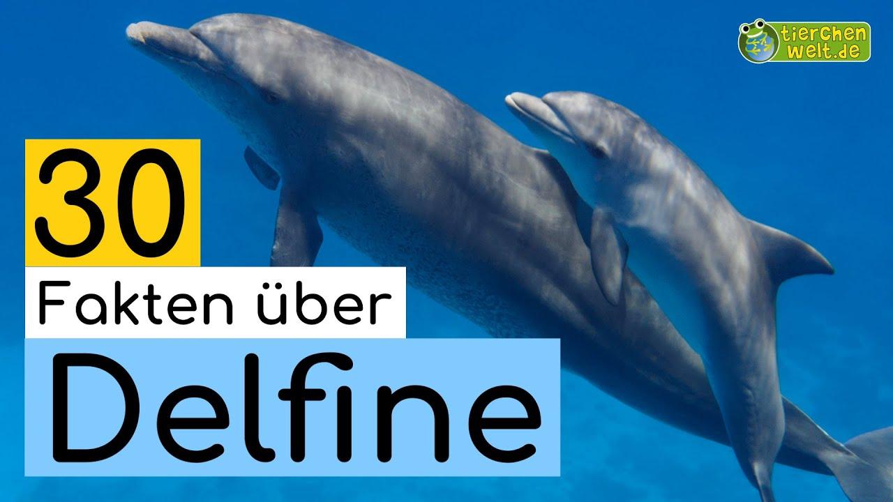 30 steckbrieffakten über delfine  dokuwissen für kinder