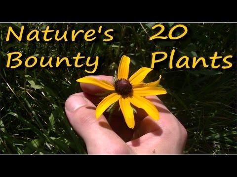 20 Edible & Medicinal Plants In 10 Minutes
