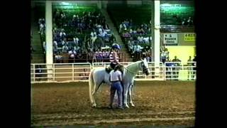 Arabian Celebration, black stallion, horse helps girl in wheelchair, inspiring.