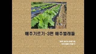 배추재배관리-3(해충편)
