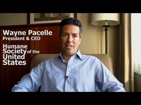 Wayne Pacelle CEO HSUS Interview Part 1 of 9 for WA2S Profiles ...