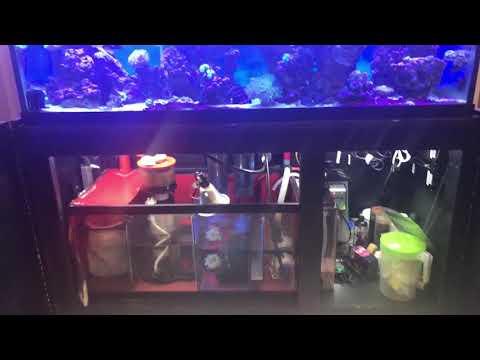 120 Gallon Reef Marine Custom Aquarium and Sump Filter