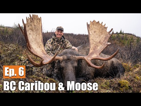 My BC Bull Moose | 2019 British Columbia Caribou & Moose (Ep. 6)