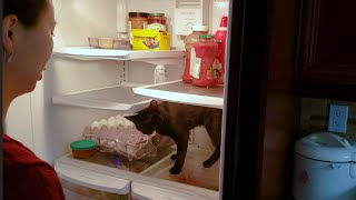 cat won't stay out of fridge