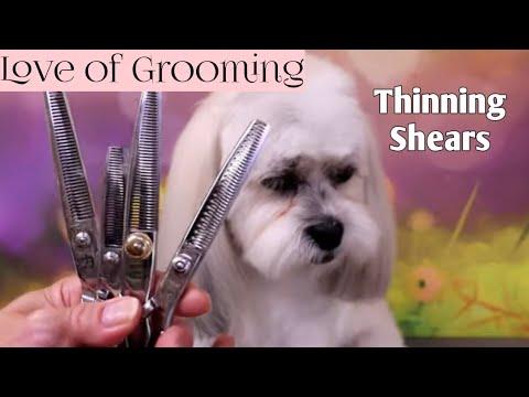 Thinning Shears, Blending Shears, Texturizing Shears and Chunkers