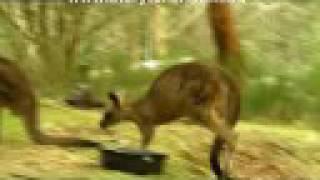 Animal X - Part 7 Thylacine - Animal X Natural Mystery Unit | Storyteller Media