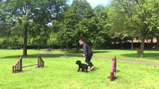 Fun, Focus & 4paws Class (pre-agility) With D.o.g Dog Training, Glasgow