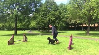 Fun, Focus & 4paws Class (pre-agility) With D.o.g Dog Training, Glasgow