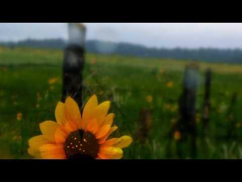 Biosphere - Warmed by the Drift