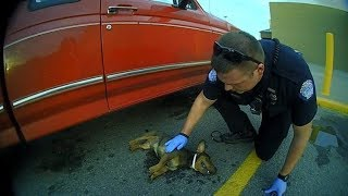 Top 10 Amazing Cops Rescues | Real life heroes