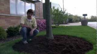 How To Mulch Your Landscape Properly