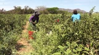 La Montaña de Guerrero: Tierra de Mujeres Migrantes