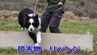 我が家の癒し系愛犬ハリーくんは、もう御年11歳のシニア犬。 レントゲン...