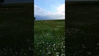 Bal Trakyam horozdere bal üretim çiftliği