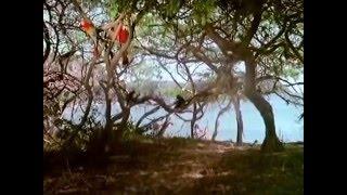 Робинзон и Пятница на необитаемом острове / Robinson y Viernes en la isla encantada