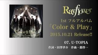Rayflower - Garbera