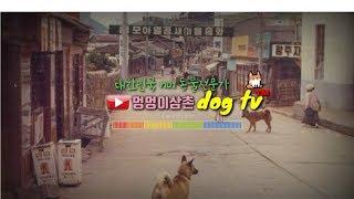 시흥엔젤홈 유기견보호소 방문후 돌아가는길