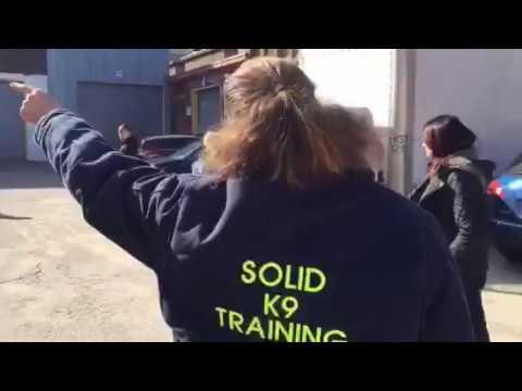 Training | Getting ready for group walk | Solid K9 Training Dog Training