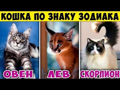 Вопрос: Кота с каким характером лучше выбрать для проживания в доме?