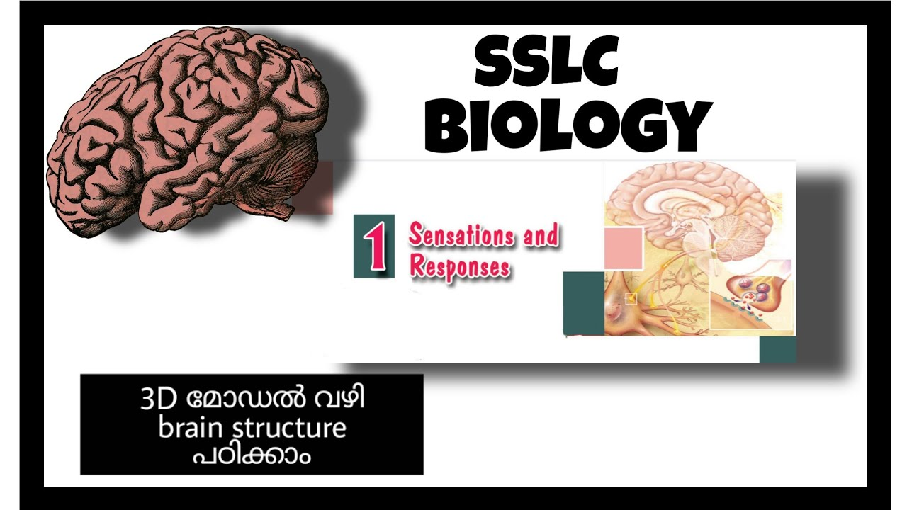 Brain structure # Chapter 1: Sensations and responses ...