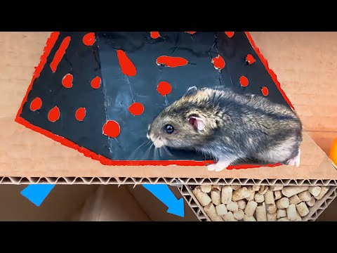 5-levels Hamster Maze for funny and cute hamster [WASTED]