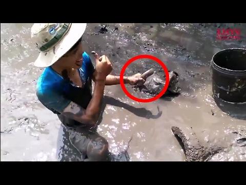 Trải nghiệm những pha bắt cá của những cao thủ bắt cá đồng này đầy thú vị, Lists 10 sự thật