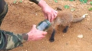 Real Life Heroes Rescue Animals 🦌🦒🐘 Cute Animal Videos Compilation 2019
