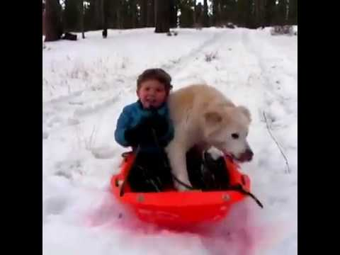 Dogs Love Snow Compilation 2017