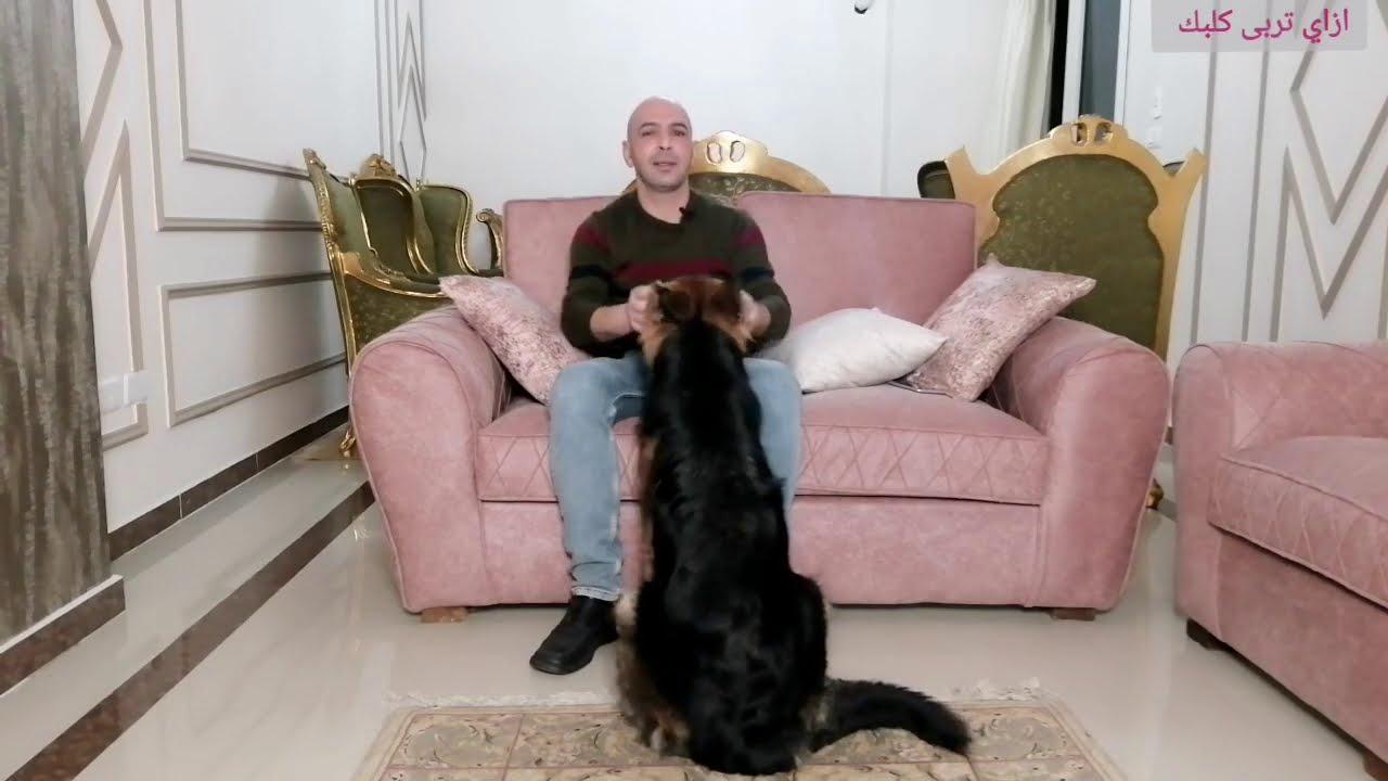 الجواز الصناعي/هيبرة الكلب/اضرار كثرة البيض و الزبادي/ليه الناس بتجيب كلاب غالية