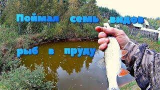 ✔️Рыбалка на пруду Поймал семь видов рыб