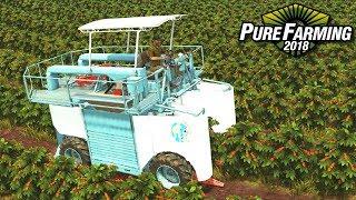 Zbieranie kawy w Kolumbii - Pure Farming 2018 | #39